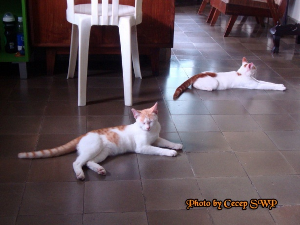 Kucing Takut Tikus